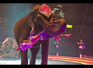 Syrian Shrine Circus Tickets