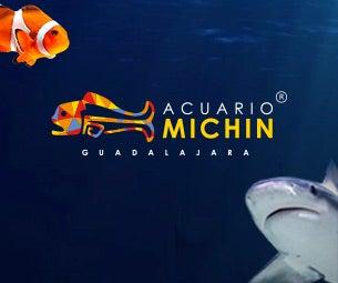 Acceso General Acuario Michin