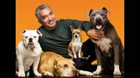 presale code for Cesar Millan Live tickets in Lynn - MA (Lynn Auditorium)